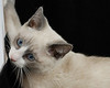 kitty RW