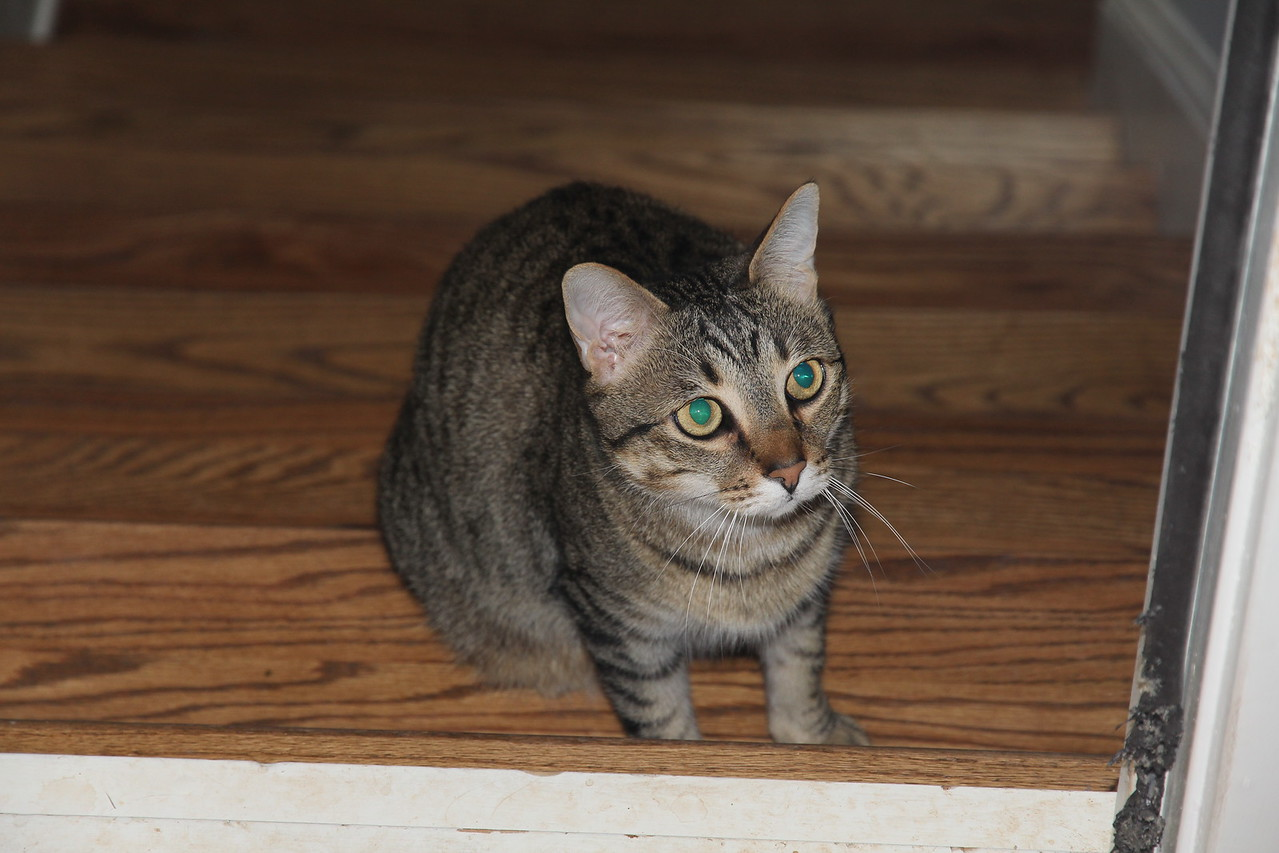 one of Anne's cats