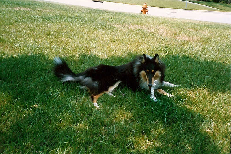 Duchess 5/90