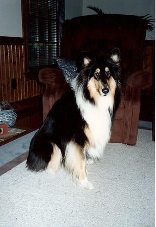Duchess 1/91