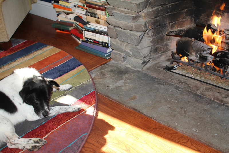 Bessie rests by the fire - Thanksgiving '11