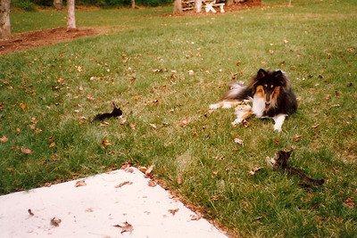 Duchess, Penny and Thunder  5/90