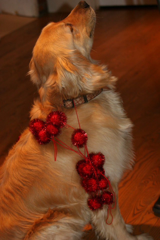 Rex decorated for Christmas