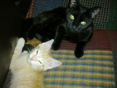 Stanley & Sammy
