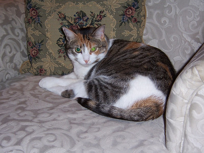 Abby: The Calico Princess - currently residing with Ian & Glenn