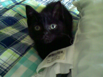 Sammy as a wee kitten