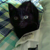 Sammy as a wee kitten