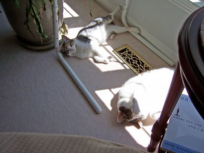 Abby and Lucky sunbathing