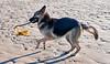 Maya at Prestwick Beach - 21 January 2017