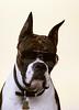 Wrinkles. His police dog look.