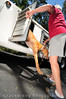 Joyce helps the first greyhound, Lamb Chop, out of the hauler.