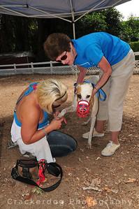 Texas Lisa (AKA Ahk Texas Lisa) is checked for ticks
