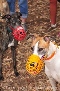 Dodger (AKA Go Dodger) and Hunza (AKA Bella Hunza)