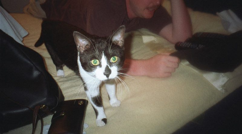 This photo was taken a few months after I picked him up at the SPC in Largo.  I was dropping off a large cat that was tearing up my other cat buddy.  I was unsuccessfully trying to find another kitten when as I pulled up to the SPC someone else pulled up in another car and ask me if I'd like a kitten.  I thought it had to be a joke because it just too convenient but there he was, the ugliest little kitten I'd ever seen.<br /> <br /> And he couldn't have been a better find.