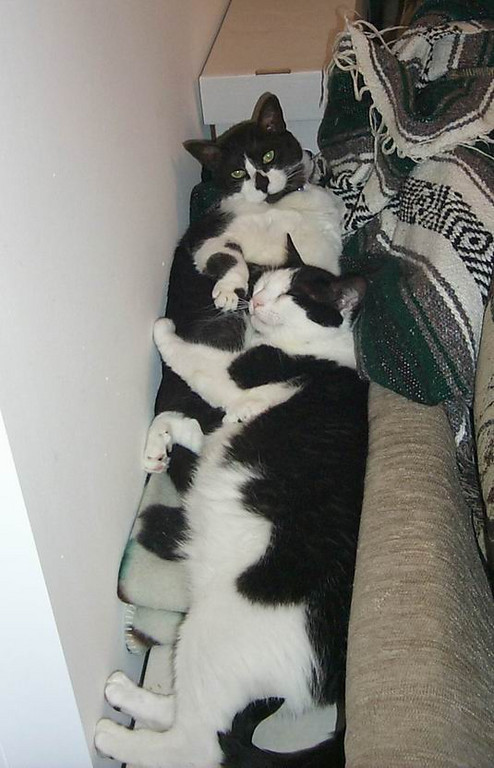 Fatboy and Buddy cuddling up on top of some comic book boxes.  It was their favorite place to sun and sleep.