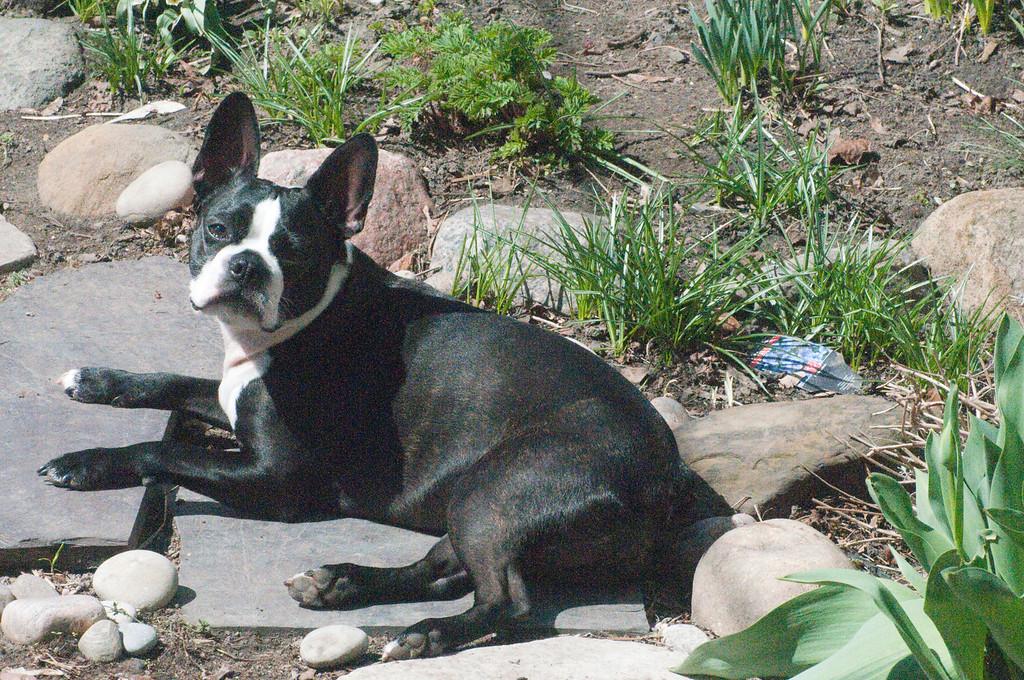 Poppy enjoying some Spring sunshine.