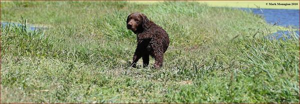 Field Training 8-14-2010