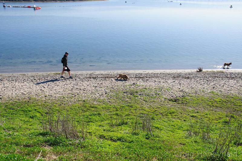 Steve, Sammy, Baron walking alone the shoreline at Fiesta Island