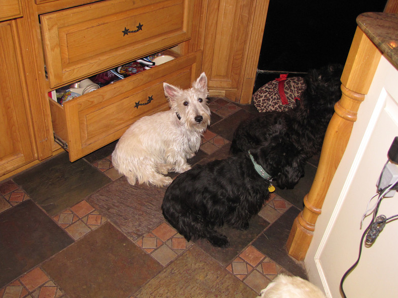 Finn in back with black collar. In front of him are Aggie, Kelsey & Lorna...