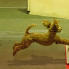 Molly<br /> Omaha Flyball Tournament<br /> November 8, 2014