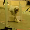 Ruby<br /> Omaha Flyball Tournament<br /> November 8, 2014