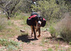 Friday carrying full weight of 25# on a hike in Woods Canyon