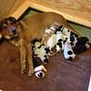 Betsy & Pups