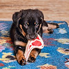 Steak bone<br /> Fräulein found a toy my mom had bought for Jasper when he was a young pup.