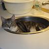 De sagde at Frederik kunne lide at ligge i vasken...