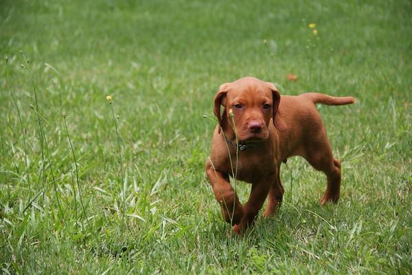 Freyja - Archiee - 7 to 8 Weeks