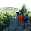 Fritz gazing out over the Blue Ridge Mountains ... probably thinking about all those squirrels out there.