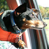 Fritz likes to travel!