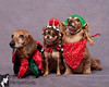 Furry Family Photos : Flint River Animal Hospital's 1st Annual Furry Family Photos
