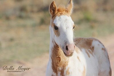 GC Horses