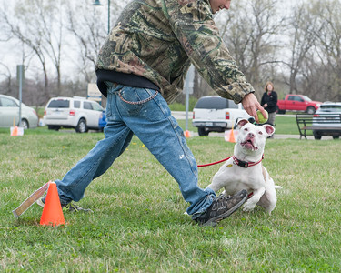 GPSPCA Rally Fun Course April 1