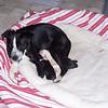 Three healthy pups-2 boys & 1 girl. (one was stillborn, a girl)