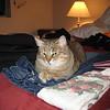 Lassie & the laundry