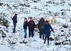 GSD Walk at Knapps Loch - Kilmacolm - 17 January 2016