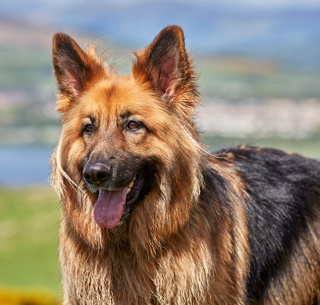 GSD Walk in Kilmacolm - 22 May 2016