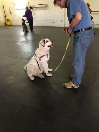 Graduating Puppy School.