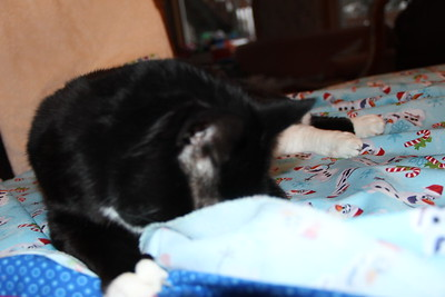Ginny quilting