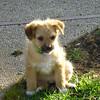 Sophia the sweetheart