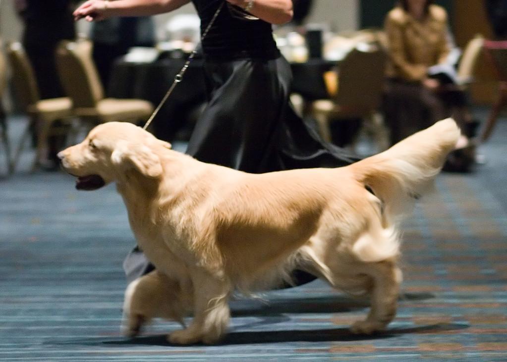 Golden Retriever Foundation Gala 2006 - Top Twenty Competition
