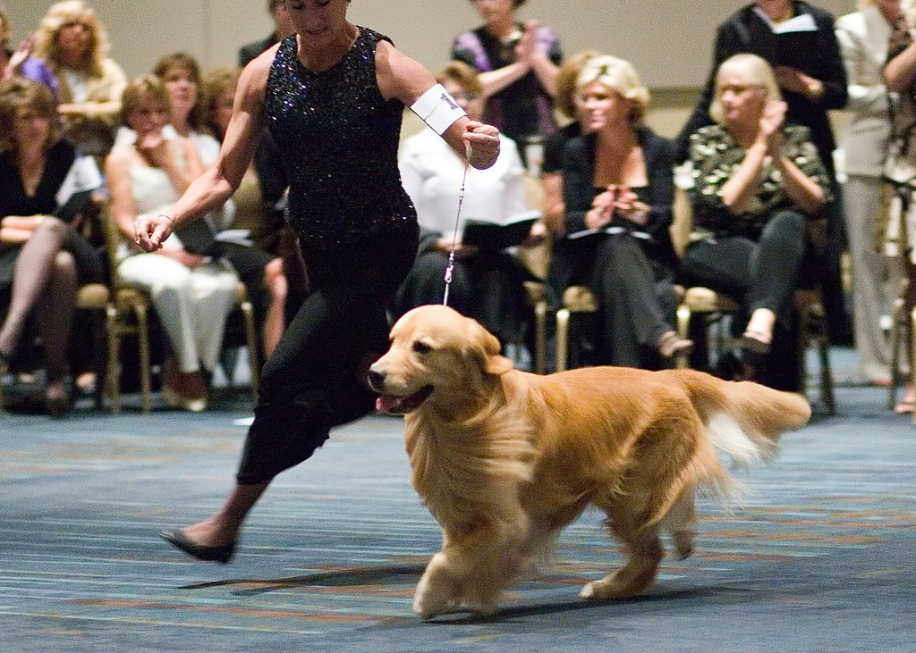 Golden Retriever Foundation Gala 2006 - Top Twenty Competition