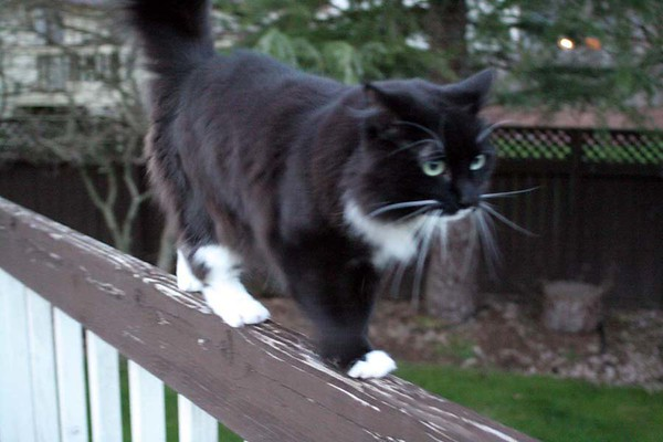 Gracie on the catwalk