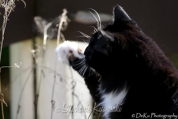 Kitties(web)_0013