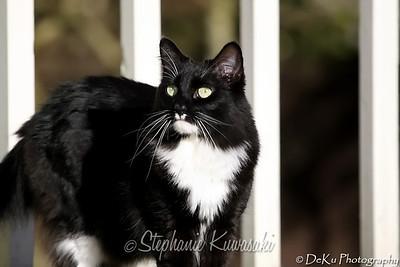 Kitties(web)_0006