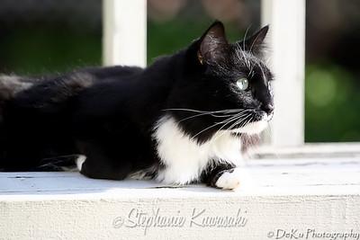 Kitties(web)_0008