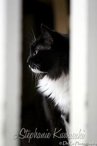 Kitties(web)_0002