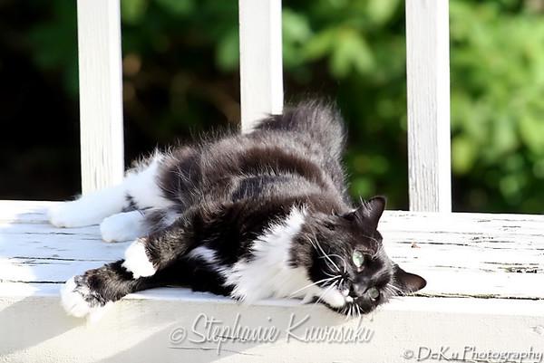 Kitties(web)_0017